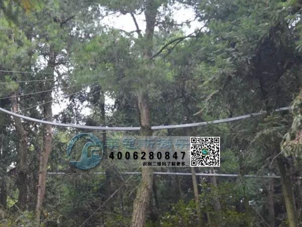 丛林穿梭项目现场